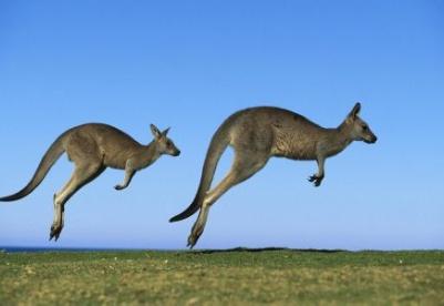 粤港澳企业组团前往澳大利亚发掘商机