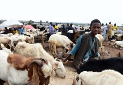 尼日利亚农业增长潜力分析