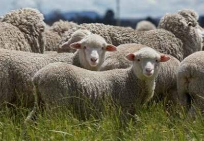 吴江检验检疫局利用国际规则应对澳大利亚羊毛进口壁垒