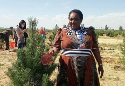 素材打包下载:9月12日,《联合国防治荒漠化公约》第十三次缔约方大会代表到纪念林种树
