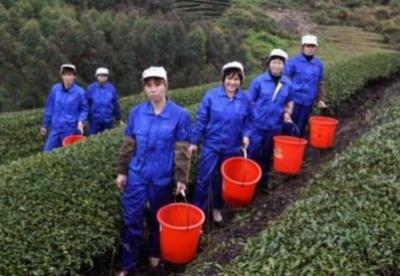 电子商务:中国农业现代化的关键