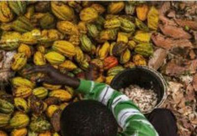评估刚果东部咖啡和可可的增长潜力