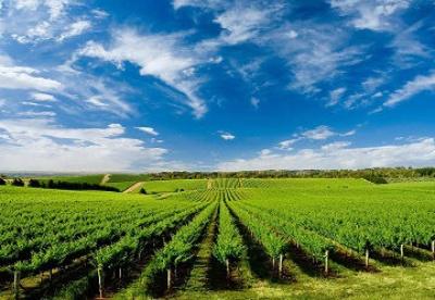 越南农业进入新发展阶段