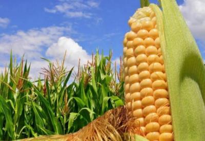 菲律宾从中国获得农业技术援助资金