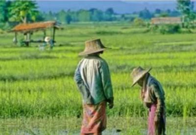 泰国农业部决定实施20年发展战略