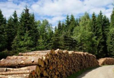 今年上半年越南林业出口额 同比增长8.4%