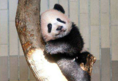我是香香,我现在很萌,不来看我吗?