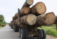 加蓬2018年第一季度木材行业业绩良好