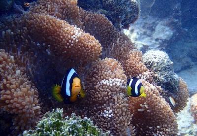 马尔代夫旅游之鲁滨逊岛旅游攻略