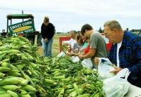 美国7月农产品出口价格创近7年来最大跌幅