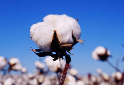 通讯:中非棉业合作帮助非洲朋友有房有车富起来