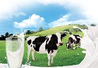 哈牛奶和奶油基本实现进口替代
