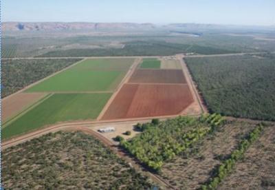 中对澳农产品启动反倾销调查引出口商担忧