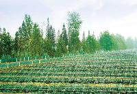 致公党中央:建议加快发展面向东盟国家跨境农业
