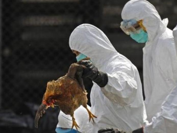 以色列暴发H5N8型禽流感疫情