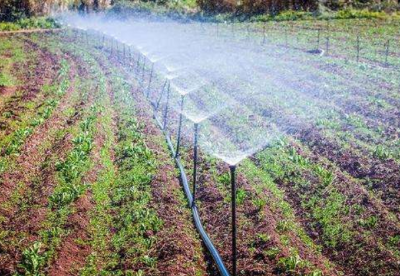 摩洛哥举办国际农业展  助推农业现代化