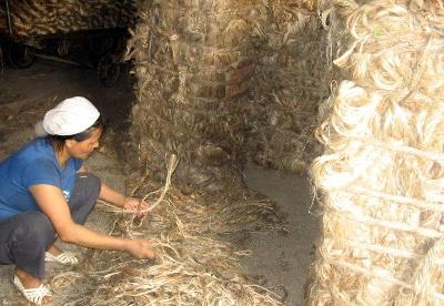 孟加拉黄麻产品出口下降