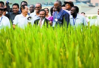 中国杂交水稻帮助发展中国家保障粮食安全