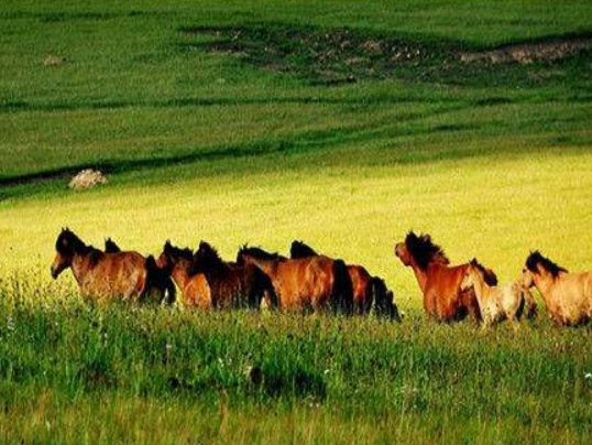 """旅游带动内蒙古巴林草原变身""""绿富美"""""""