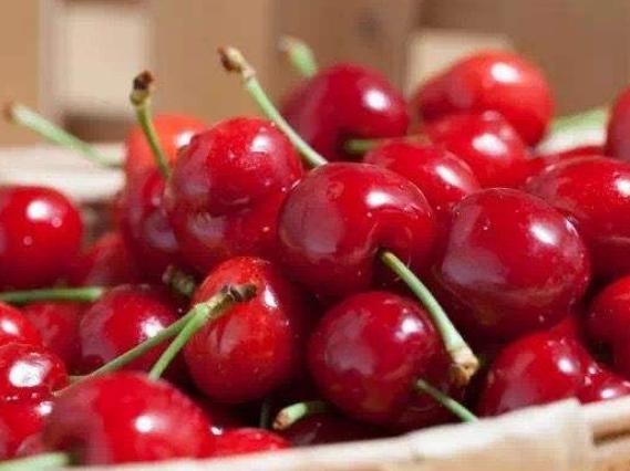 中亚樱桃批量进入华东市场