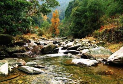 山东省财政下达约4.7亿元支持森林生态保护和修复