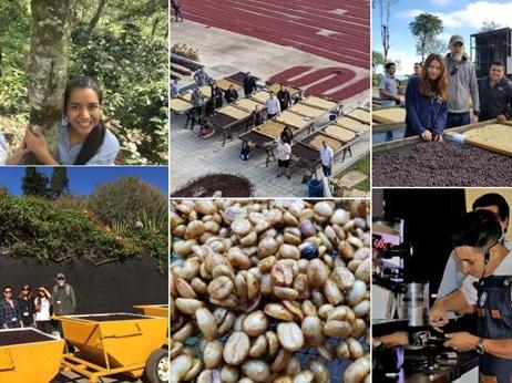 萨尔瓦多咖啡产业介绍