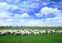 """""""羊产业""""精准激活深度贫困地区发展潜力"""