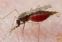 耐多药疟疾在东南亚蔓延