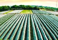 美国企业计划在哈投资大型农业项目
