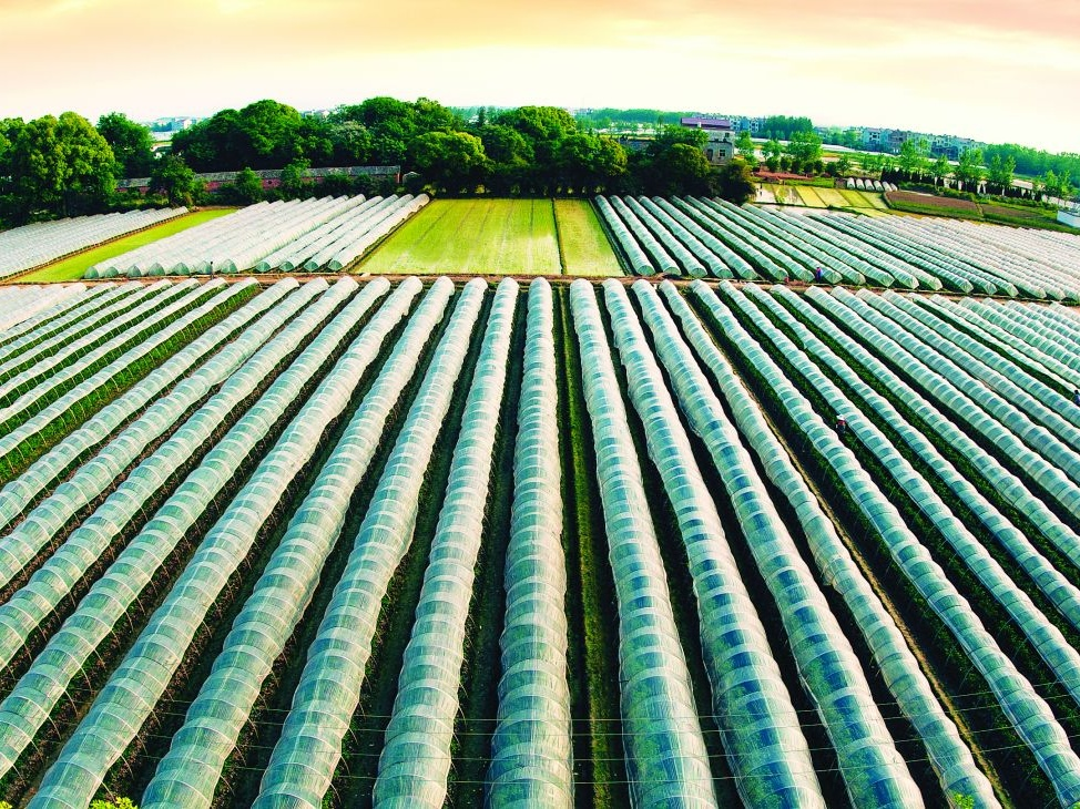 欧洲投资银行将拨款2.5亿美元发展乌克兰农业基础设施