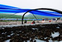 吉林汪清县以黑木耳产业带动扶贫攻坚成效显著