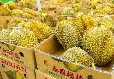 中国东盟自贸协定下泰国对中国蔬果出口量激增