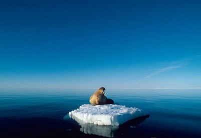 德国拟定政策将更积极保护北极