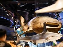 天津:国家海洋博物馆暑期迎客忙