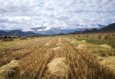 俄总理批准粮食产业发展战略