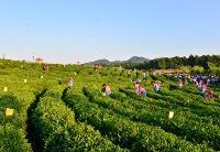 安徽力争实现31个贫困县特色优势农产品保险产品全覆盖