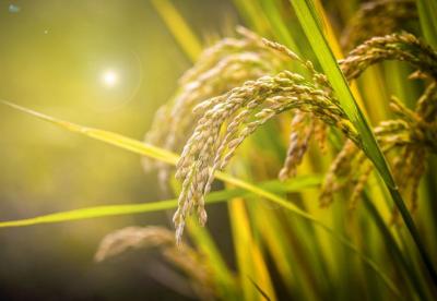 浙江将推进农业数字化转型
