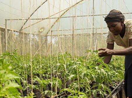 利用气候智能型农业帮助非洲解决气候风险