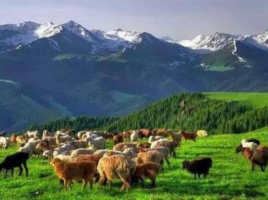 新疆多措推进草原畜牧业转型升级