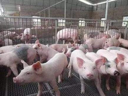 重庆出台生猪养殖企业贷款贴息政策