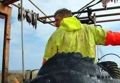 冰岛10月份水产品捕捞量同比减少19%