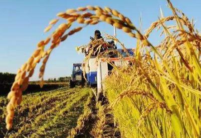 农发行前三季度粮油收购贷款投放大幅增加