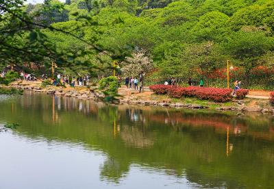 国家4A级旅游景区湖南省森林植物园将免费开放