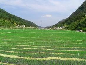 贵州1600余万亩蔬菜助49万多贫困人口增收