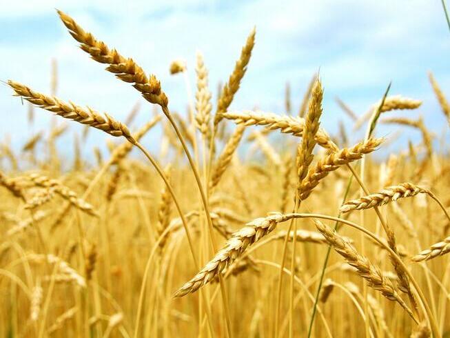 2019年乌克兰谷物产量再创纪录