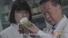 中国草 全球种——菌草技术发明人林占熺