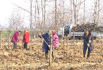 """安徽天长:植树造林壮大乡村""""绿色银行"""""""