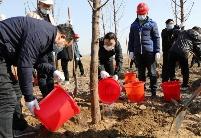 淮北杜集区开展2020年义务植树活动