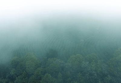 石阡苔茶——苔茶钾天下