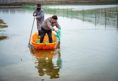 安徽五河:1.5万斤小蟹苗投放稻渔养殖基地